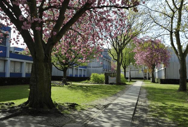 Học thạc sĩ Kiến trúc tại Vrije Universiteit Brussel, Bỉ
