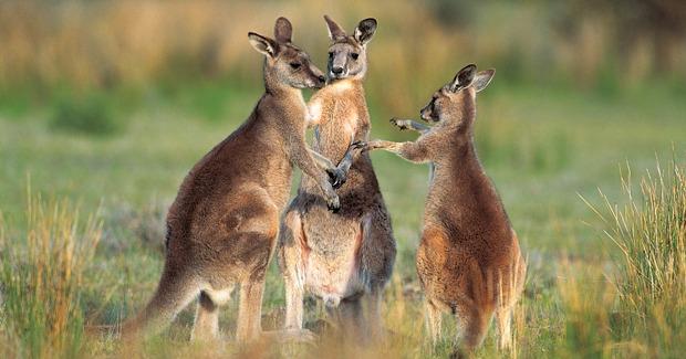 Những địa điểm du lịch nổi tiếng tại Australia